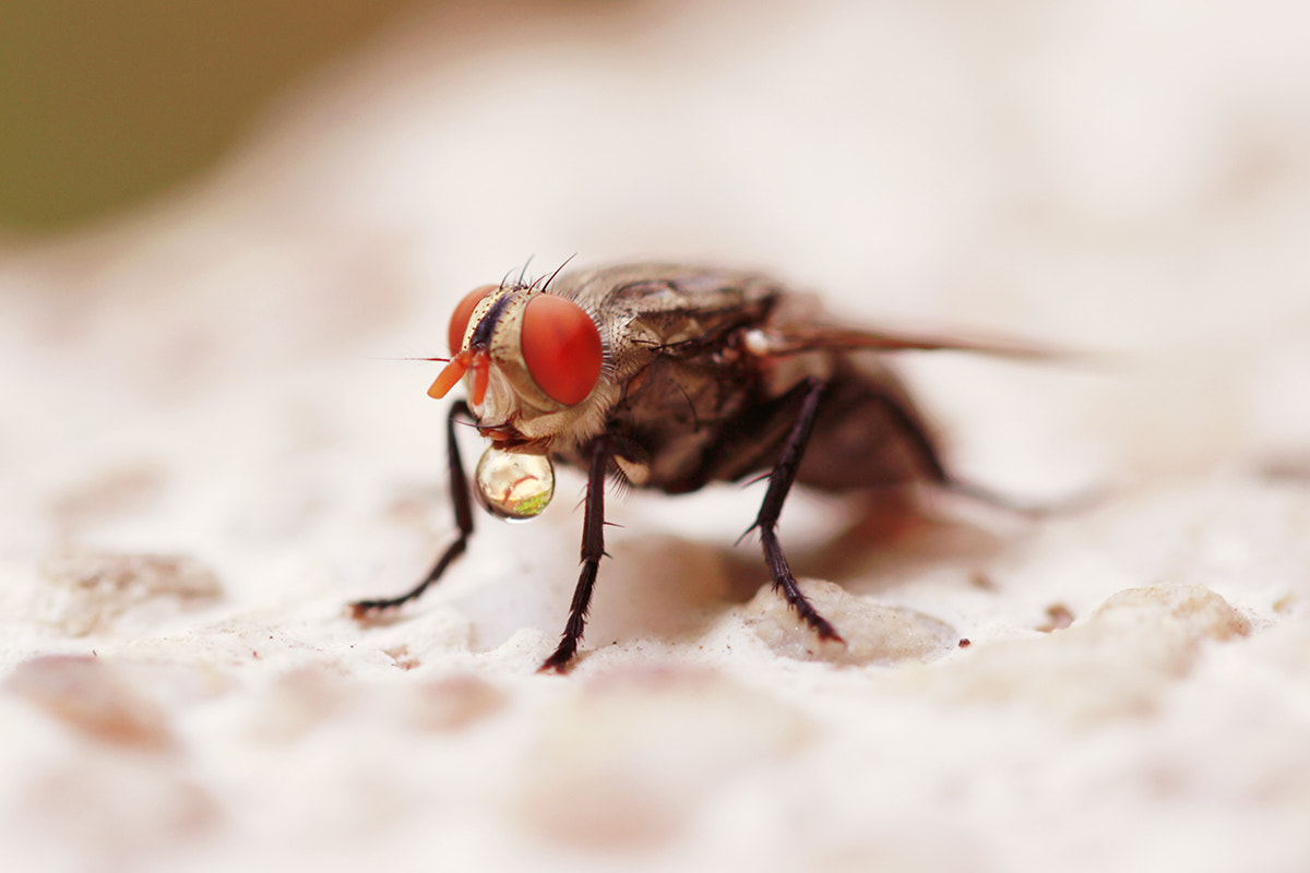 Photograph Fly II by Michael Savellano on 500px