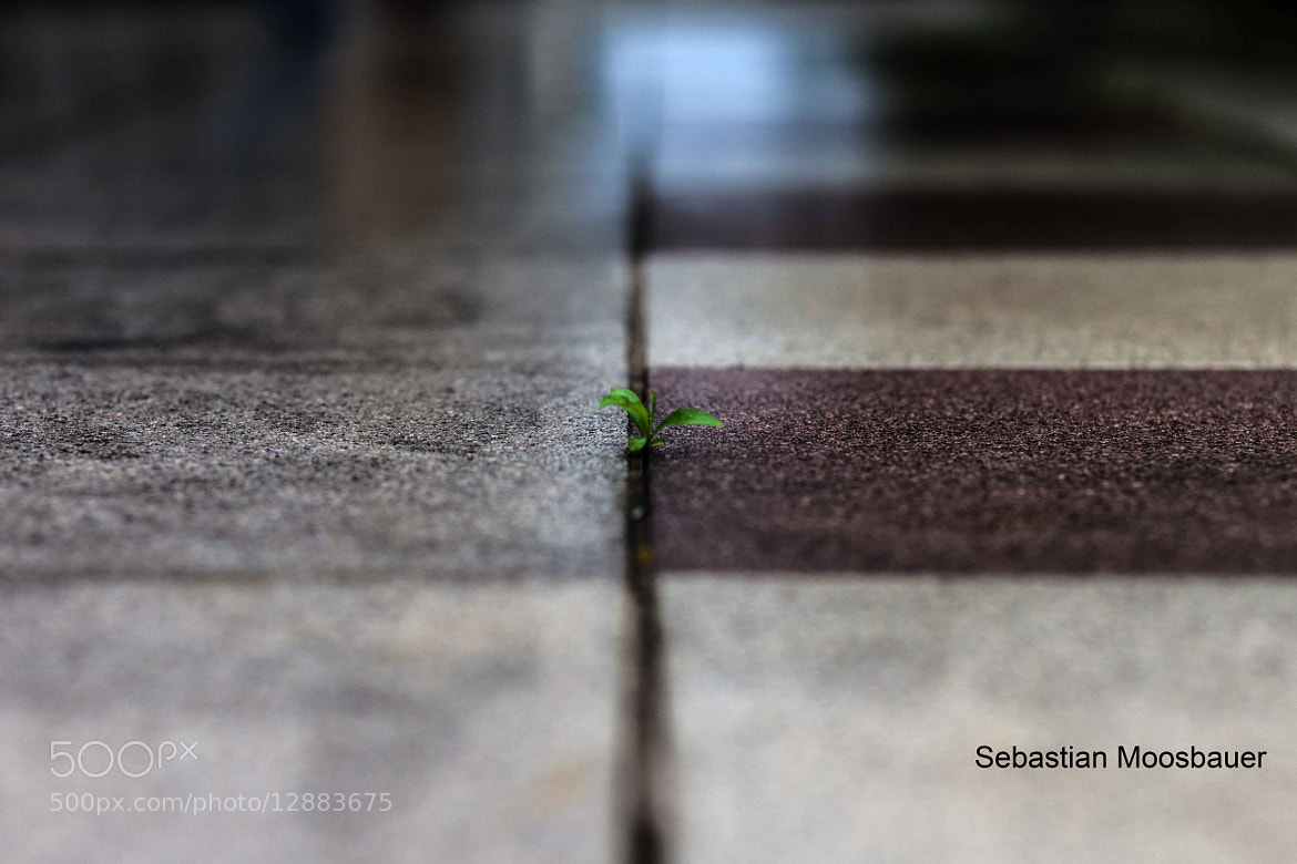 Photograph Untitled by Sebastian Moosbauer on 500px