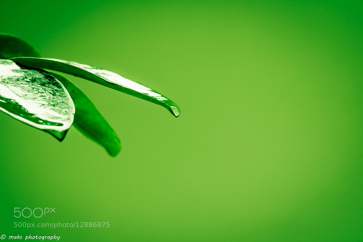 Photograph just a drop... by Mayank Singh on 500px
