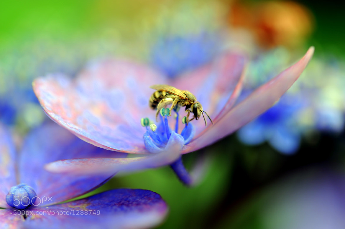 Photograph Bee by Merlin Francis on 500px