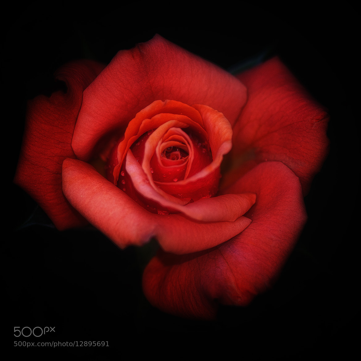 Photograph rouge by Thomas Alexander on 500px
