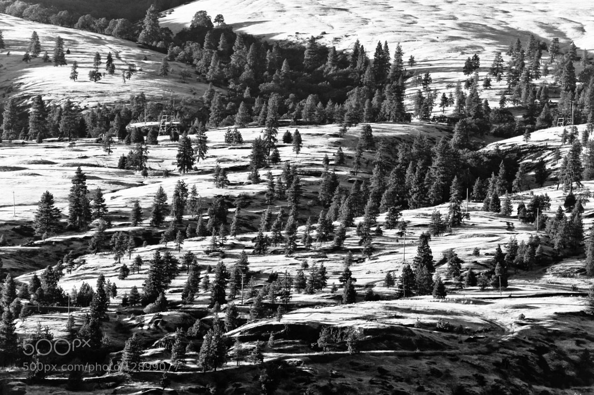 Photograph Topo Tree Lines B&W by Orlin Bertsch on 500px