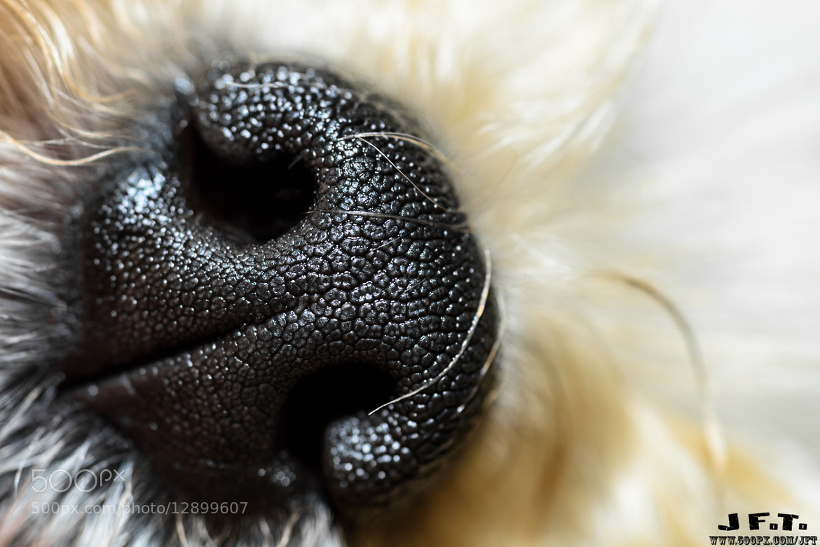 Photograph Nosey Friend by Jean-Francois Thibeault on 500px