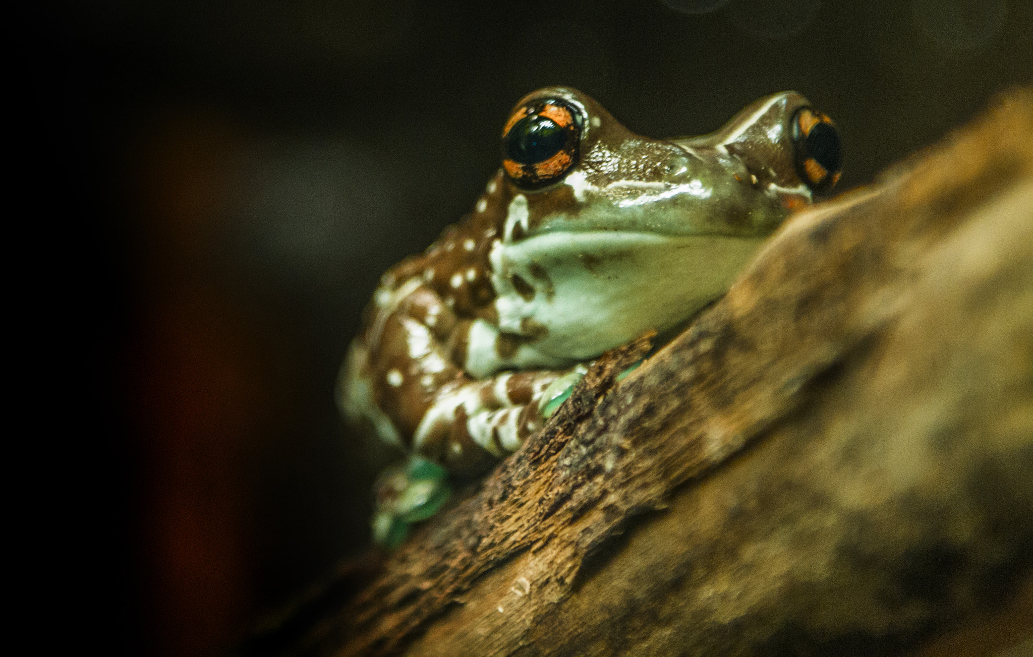 Photograph Frog by Steve Wood on 500px