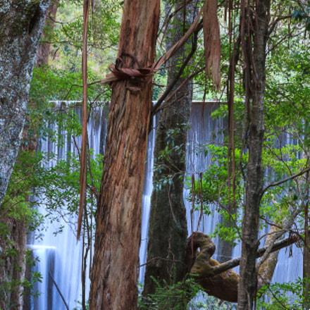 Jenolan Hanging Bark