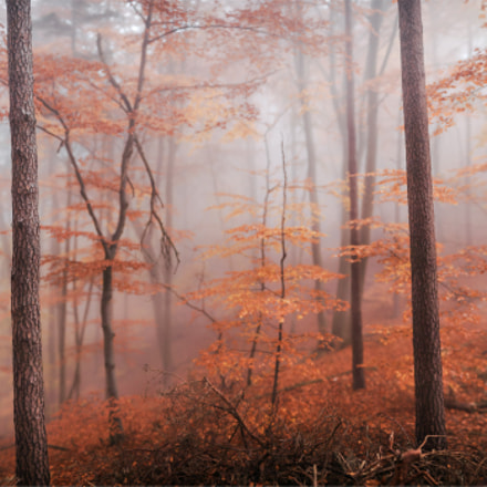 Lost in the Autumn Fog