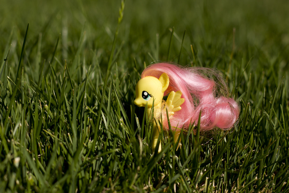 Photograph Fluttershy by LM Photography on 500px