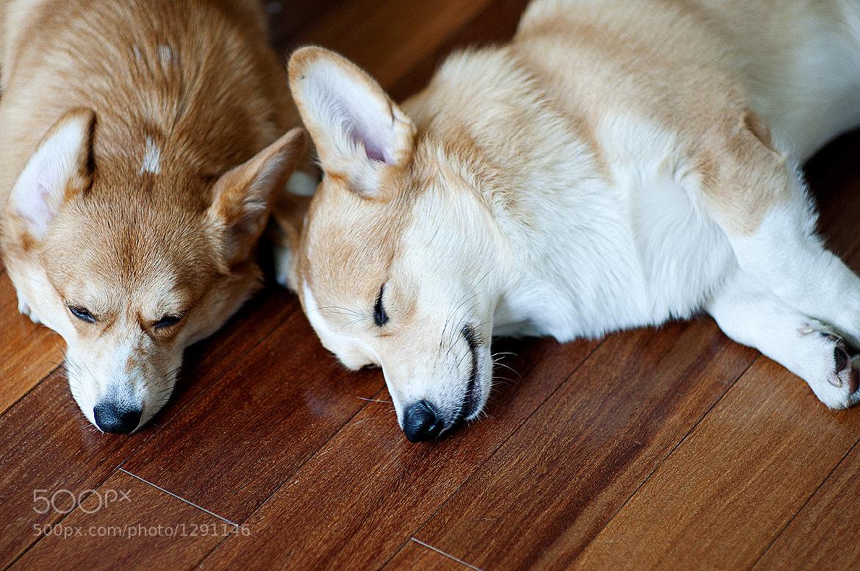 Photograph Tiny & Asahi by F. Daniel on 500px