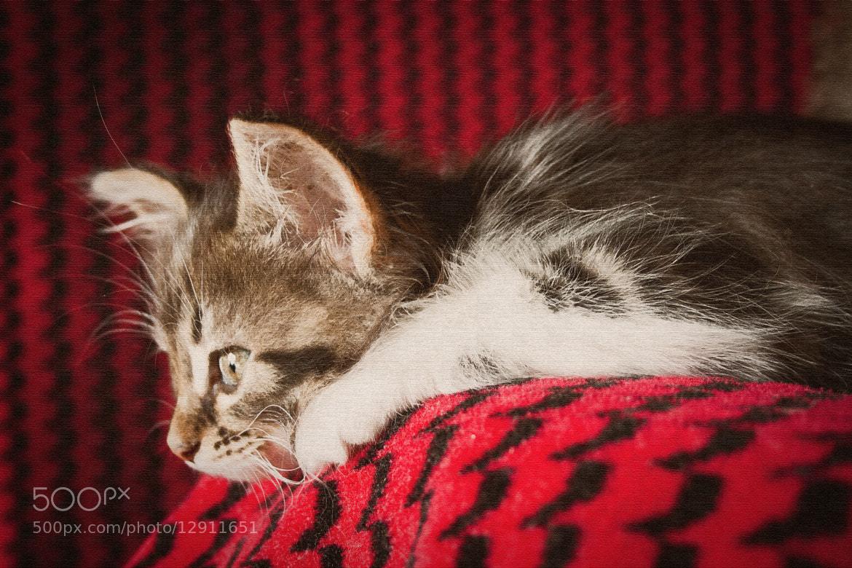 Photograph  sad  by Georgy Ananov on 500px