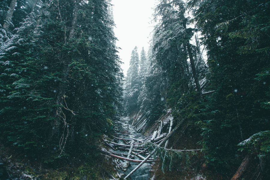 First Snowfall by Dylan Furst on 500px.com
