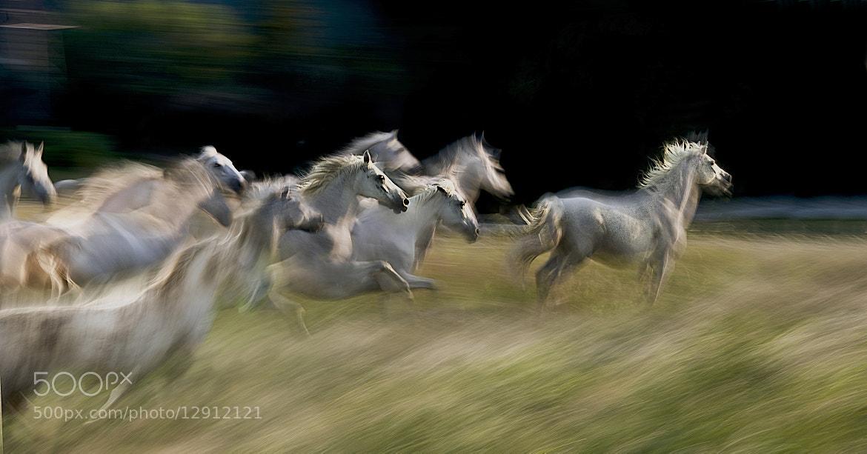 Photograph ten by Milan Malovrh on 500px