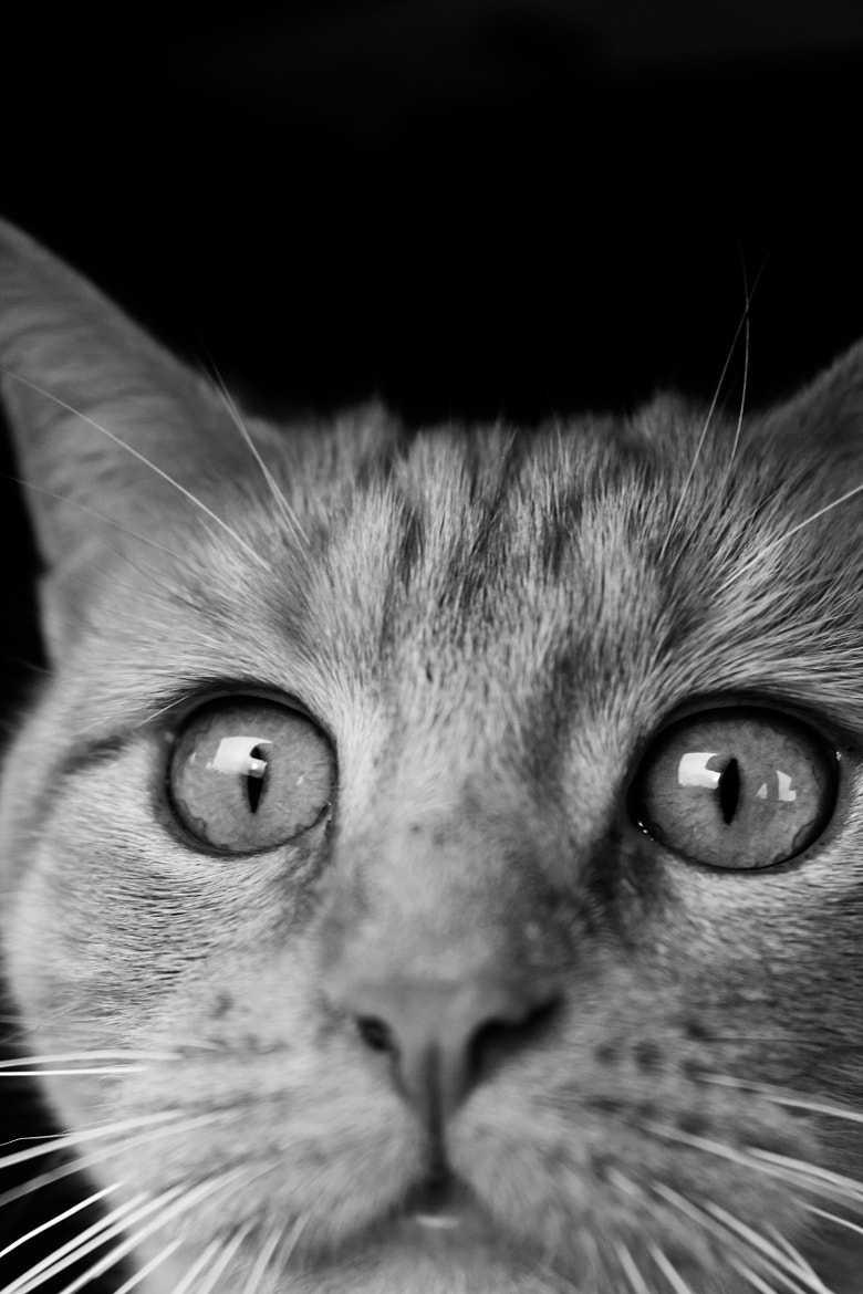 Photograph Cat by Christopher Kim on 500px
