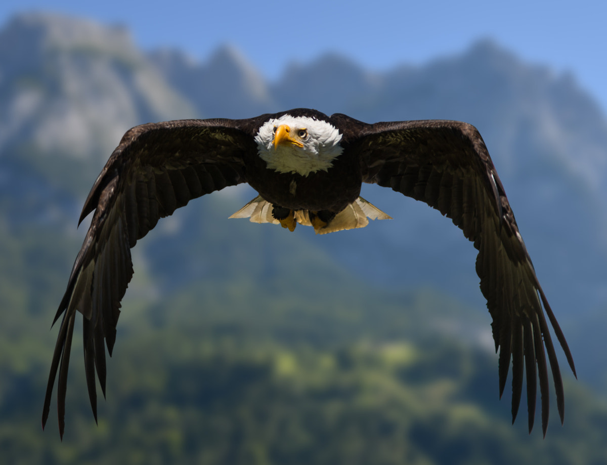 Photograph Nature's Air Force by Markus Kapferer on 500px