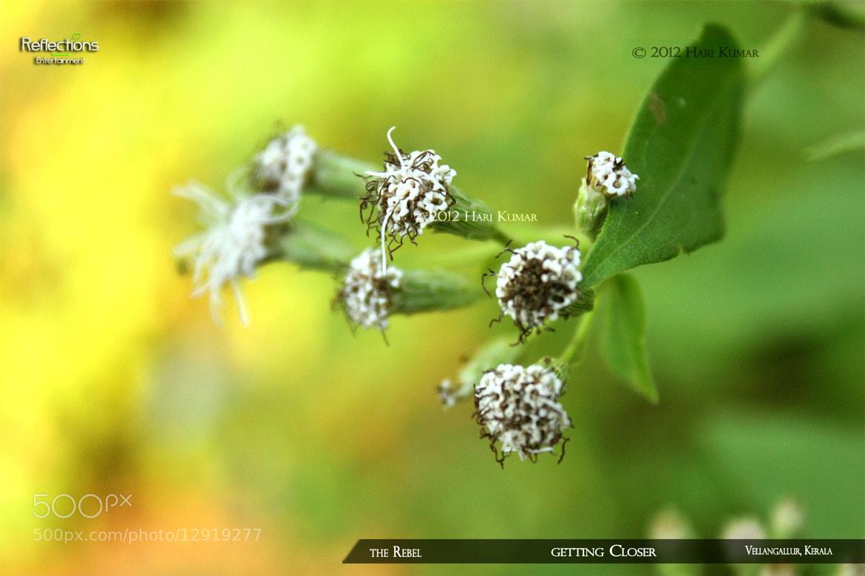 Photograph Getting closer by K.Hari Kumar on 500px