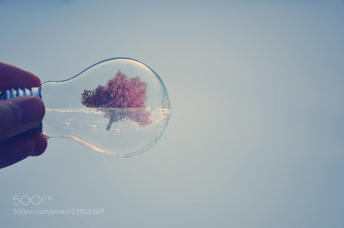 Photograph swimming tree by Adrian Limani on 500px