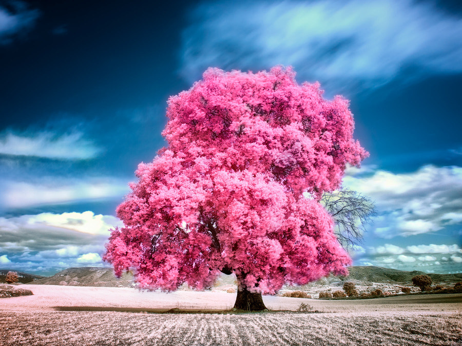Cotton Candy by Pedro  on 500px.com