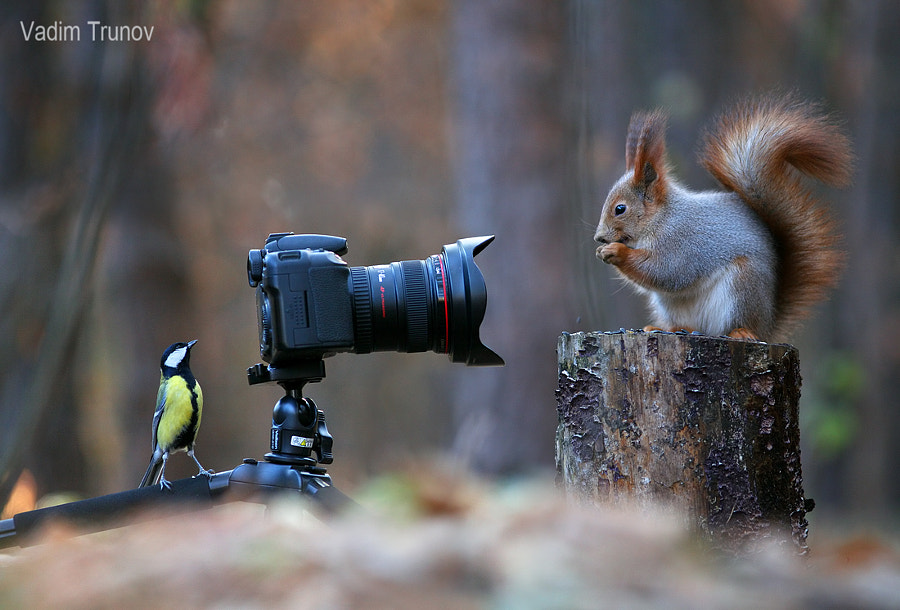 Squirrel, teach me to take pictures! by Vadim Trunov on 500px.com