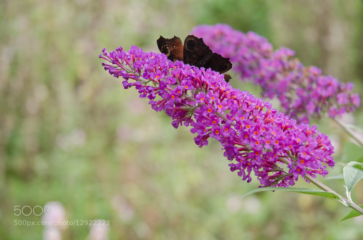 Photograph Hiding butterfly by Tadas Nesvarbu on 500px