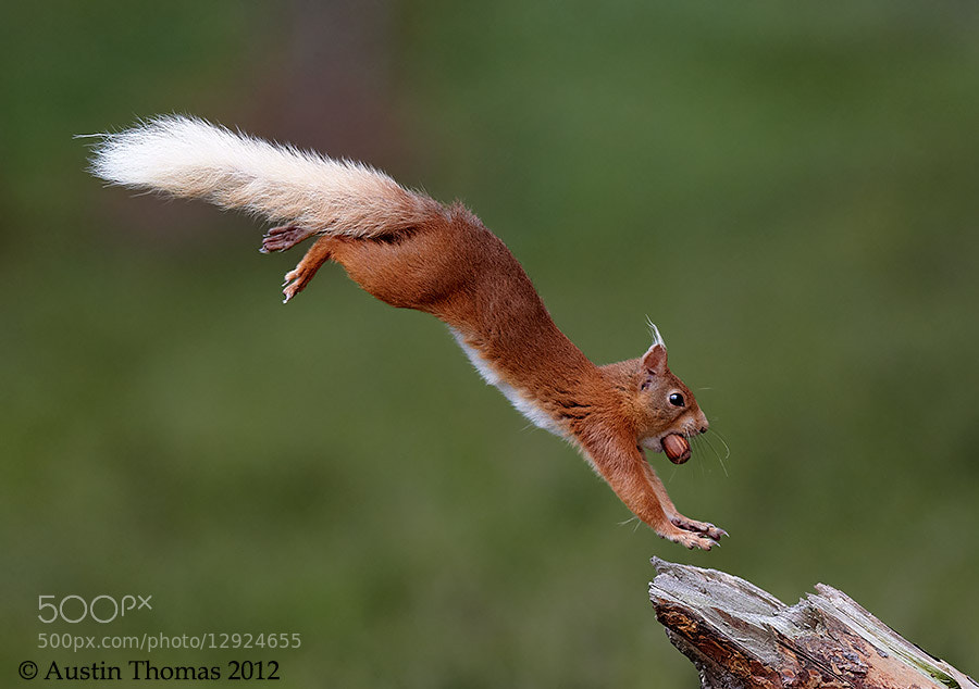 "Photograph Caught ""In Flight"" by Austin Thomas on 500px"