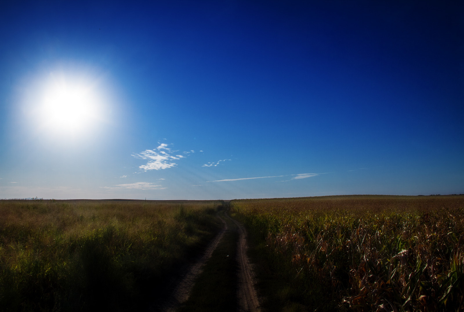 Photograph Road in the field by Damjan Dasic on 500px