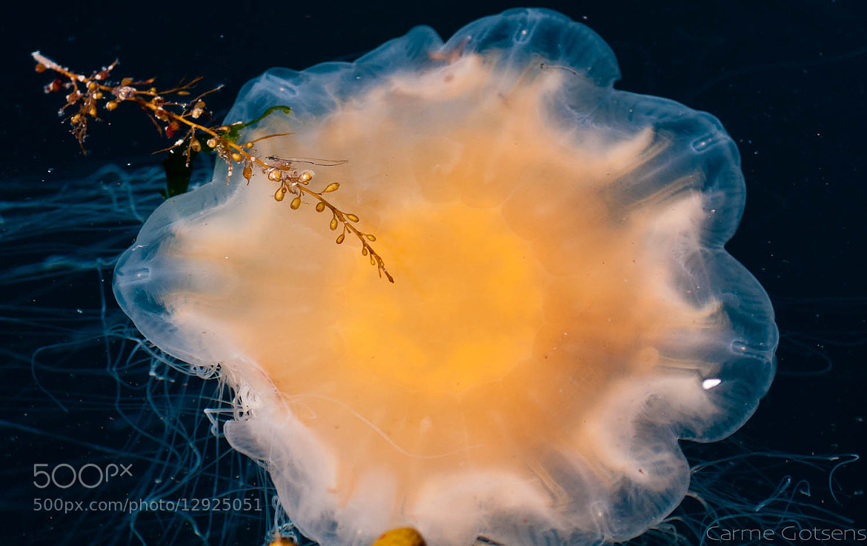Photograph Medusa by Carme Gotsens on 500px