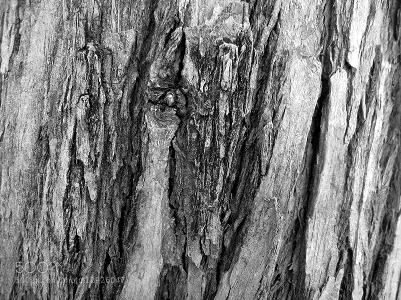 Photograph Natural Pattern by Parissa Allahyari on 500px