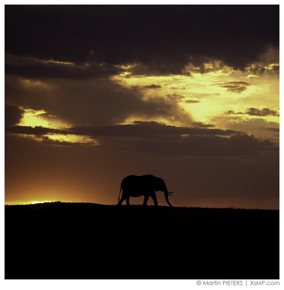 Photograph A lonely elephant by Martin Pieters on 500px