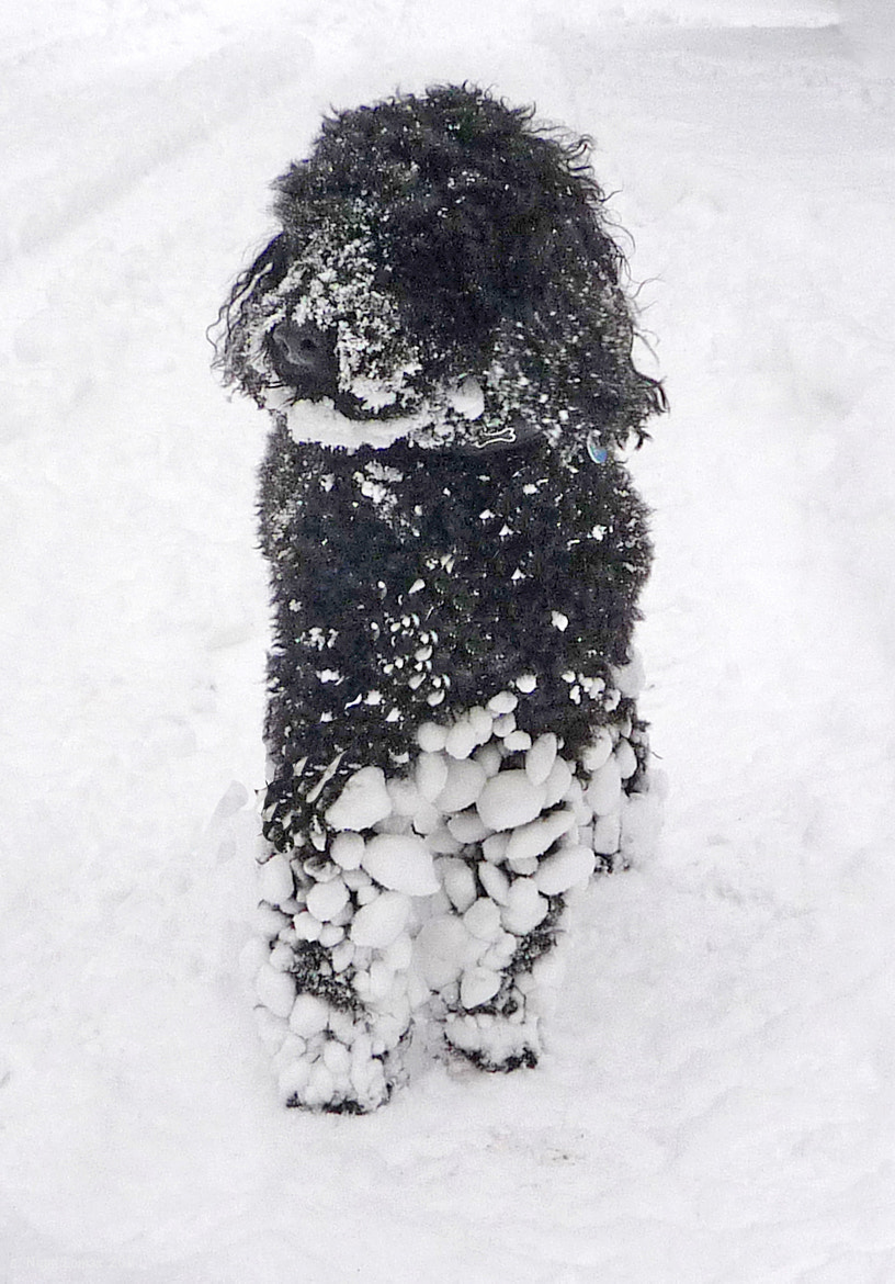 Photograph Bob in Snow by Nigel Lomas on 500px