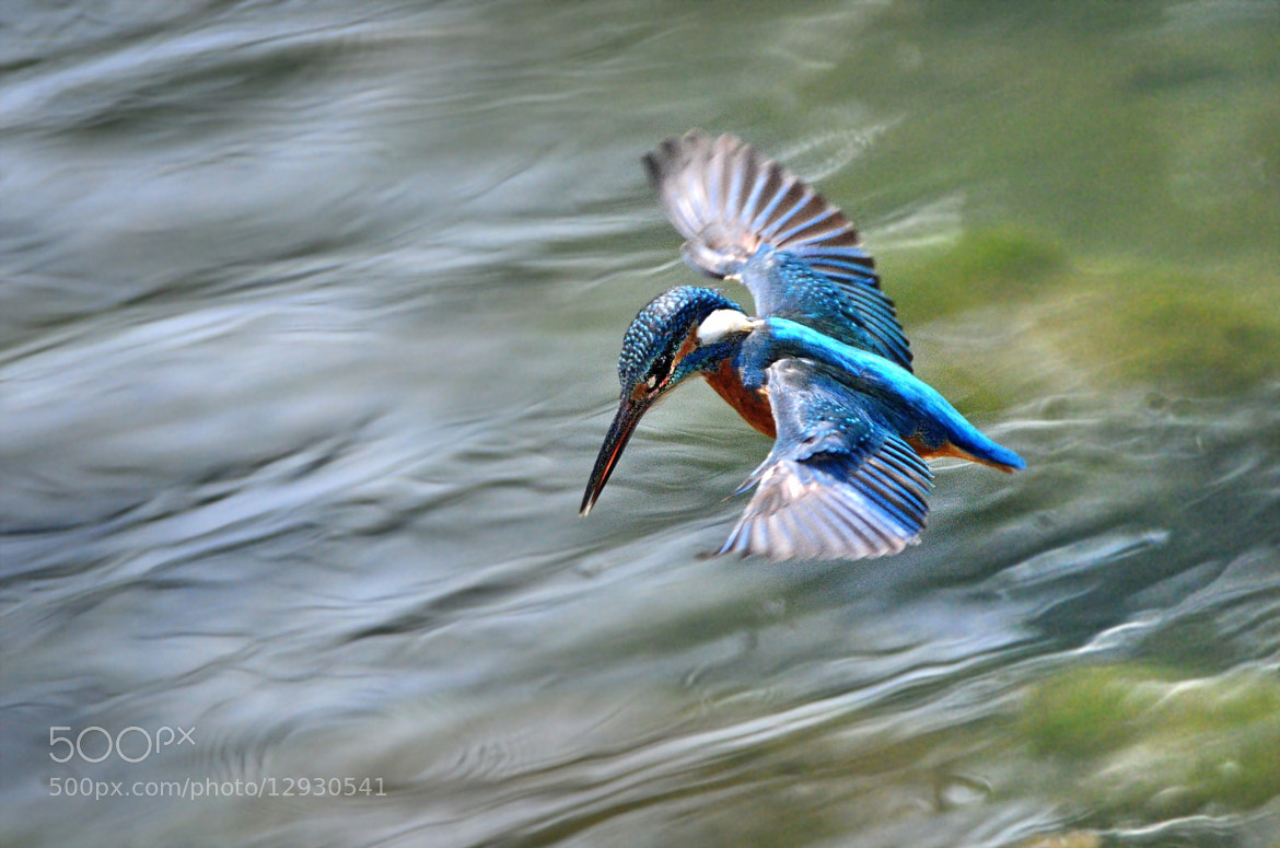 Photograph ★ Hovering -3 by KEN OHSAWA on 500px