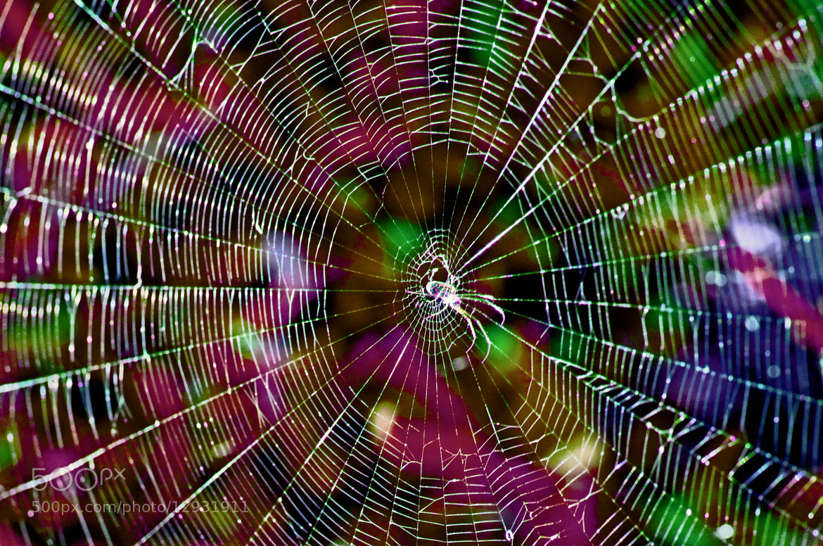 Photograph World Wide Web by Mark Luftig on 500px