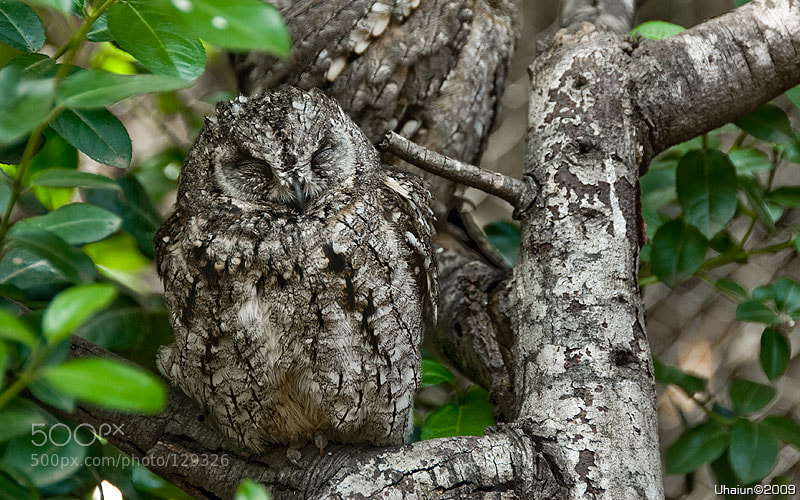 Photograph Camouflage by Vladimir Popov / Uhaiun on 500px