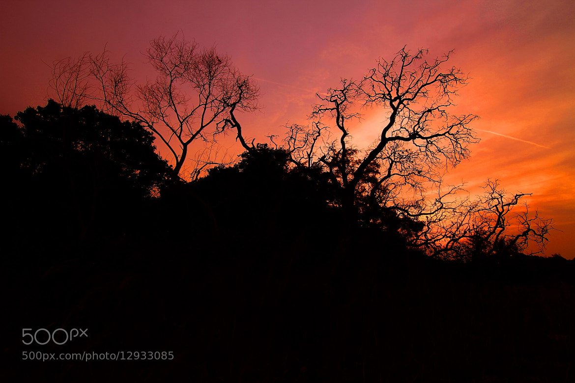 Photograph red worm trees sunset by daun cenkeh on 500px