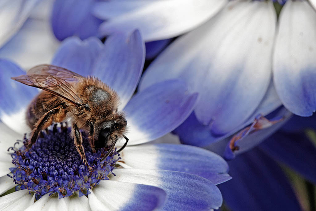 Photograph Bee and flower by Jean-Marc Isel on 500px