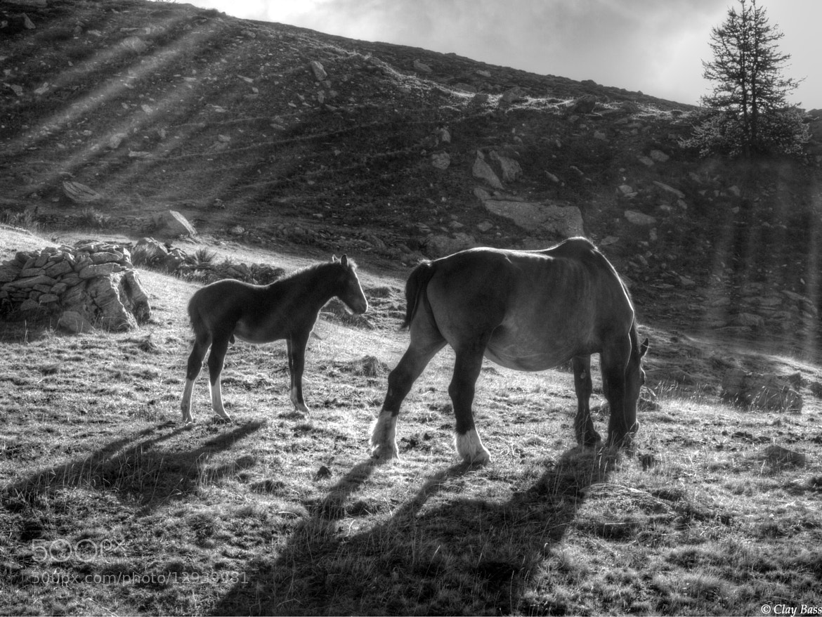 Photograph black and white horses in the sun by Clay Bass on 500px