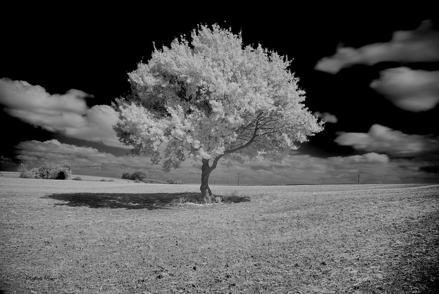 Photograph Solitary tree 2012 by remo raffaelli on 500px