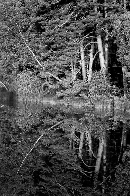 Photograph Reflected trees by Johnny Dahlén on 500px