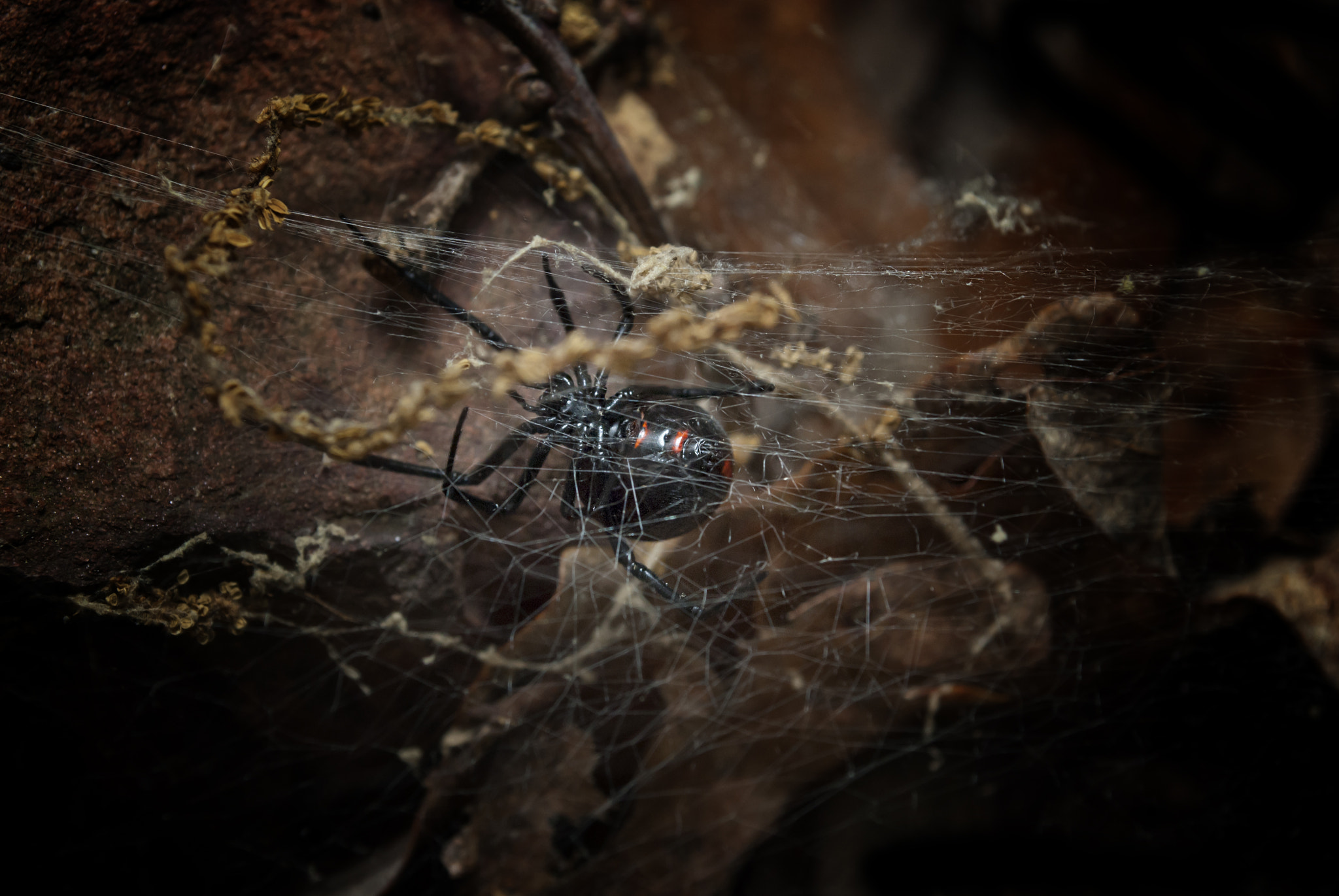 Photograph Black Widow by Brian G on 500px