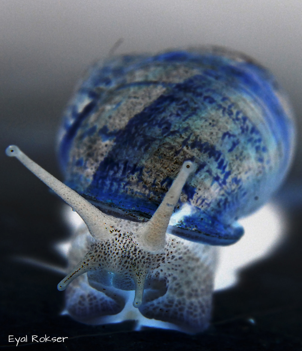 Photograph Gastropoda in costume by EYAL ROKSER on 500px