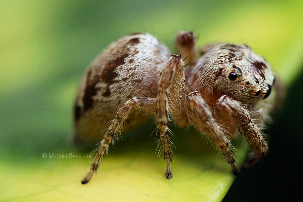 Photograph Spider II by Michael Savellano on 500px