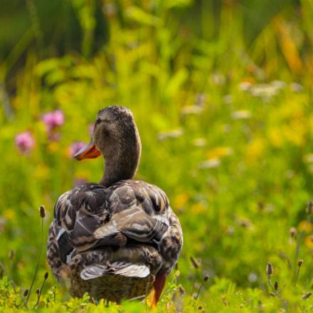 Happy Shaky Duck .....