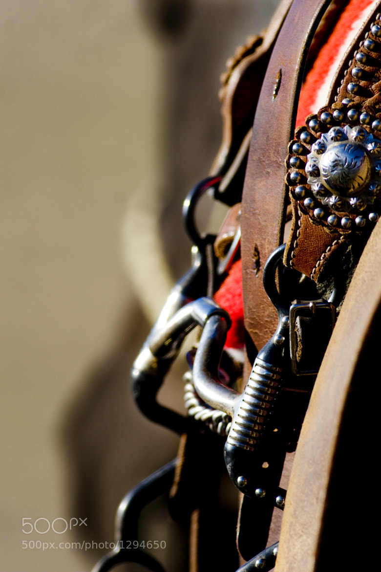 Photograph Bridle, Horse by Daryl L. Hunter on 500px