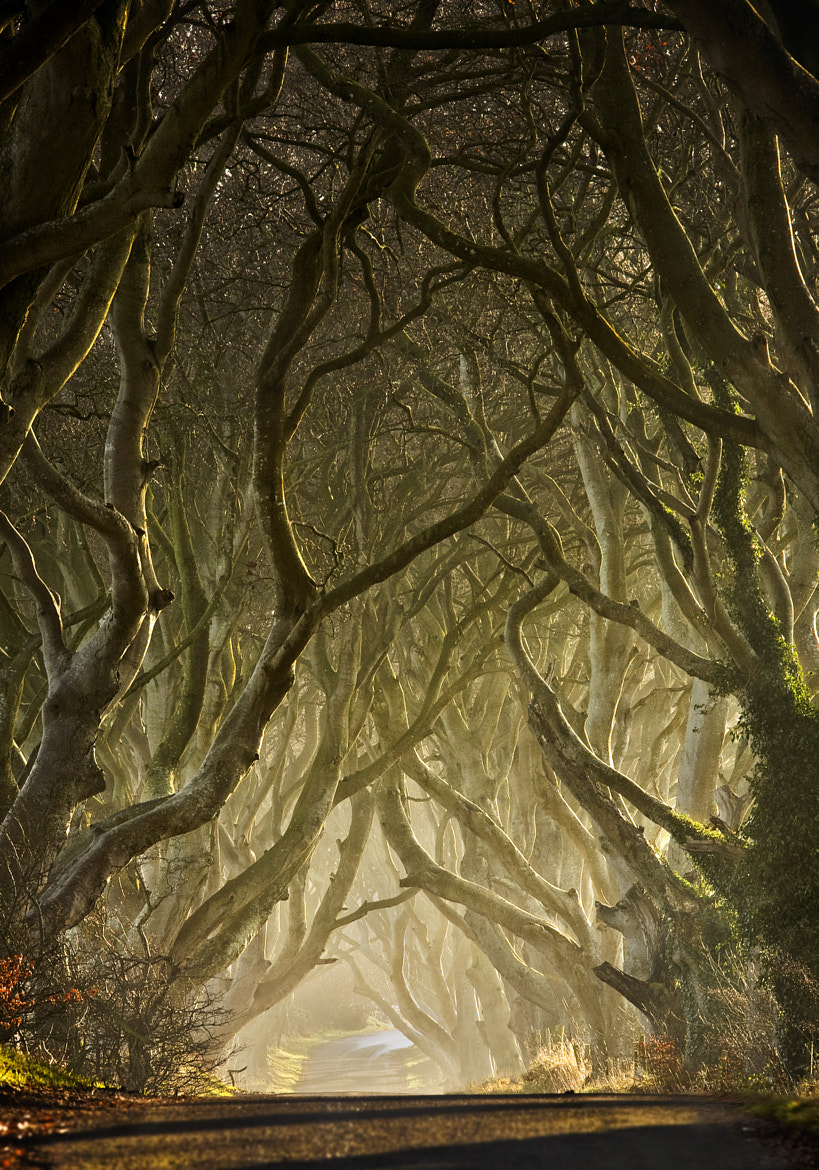 Photograph Entwined by Gary McParland on 500px