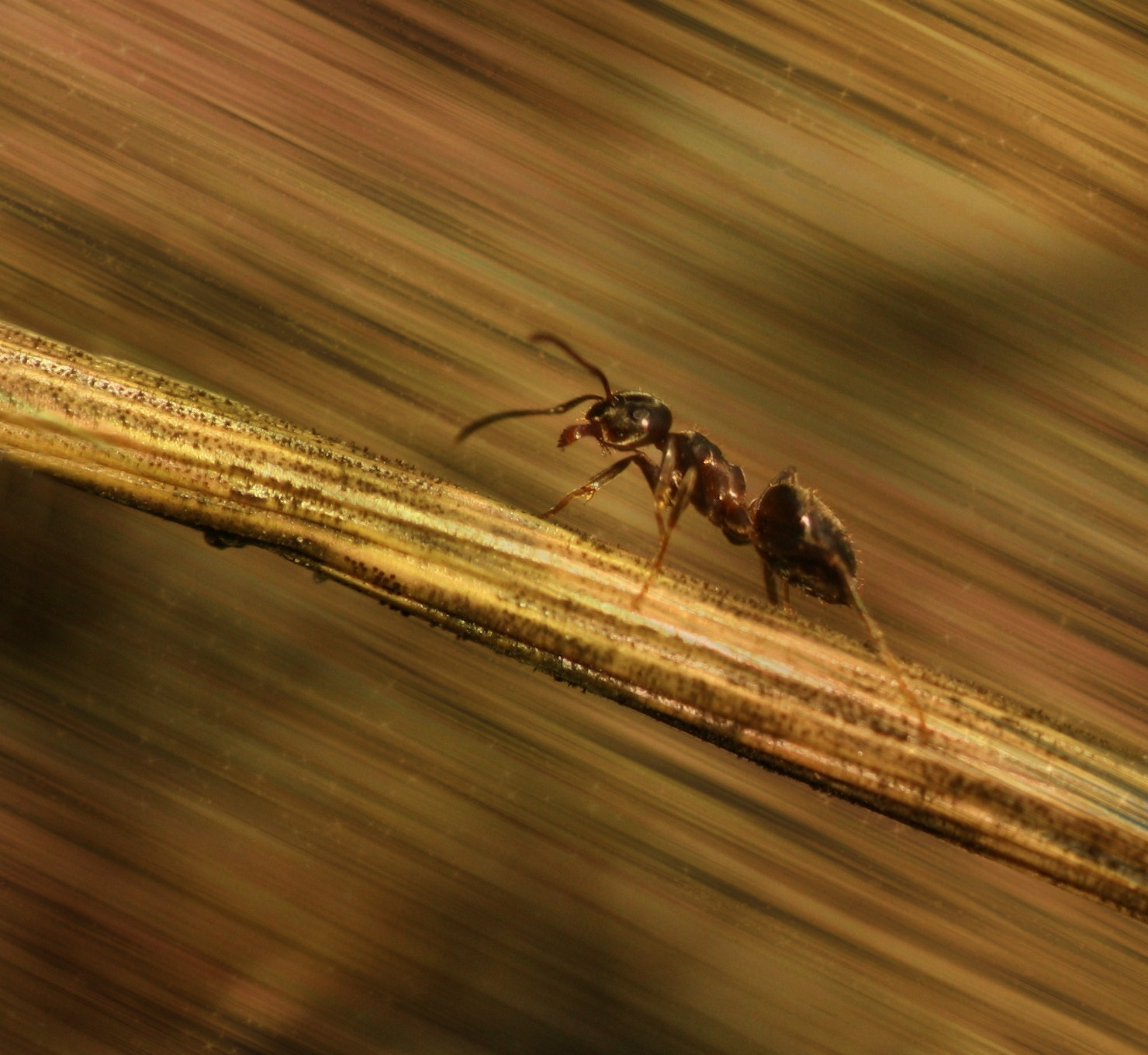 Photograph Magic Ant by Schneider  Marie on 500px
