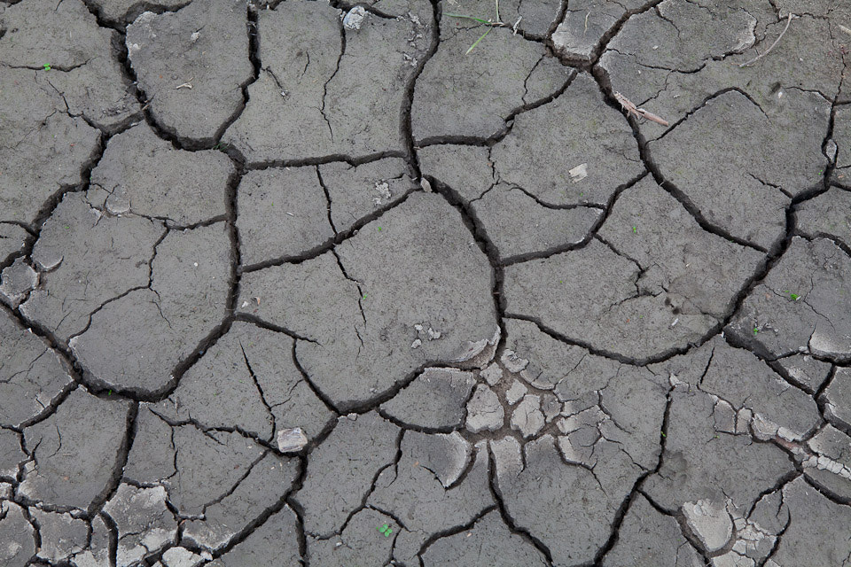 Photograph Dryness by Dennis Ekelschot on 500px