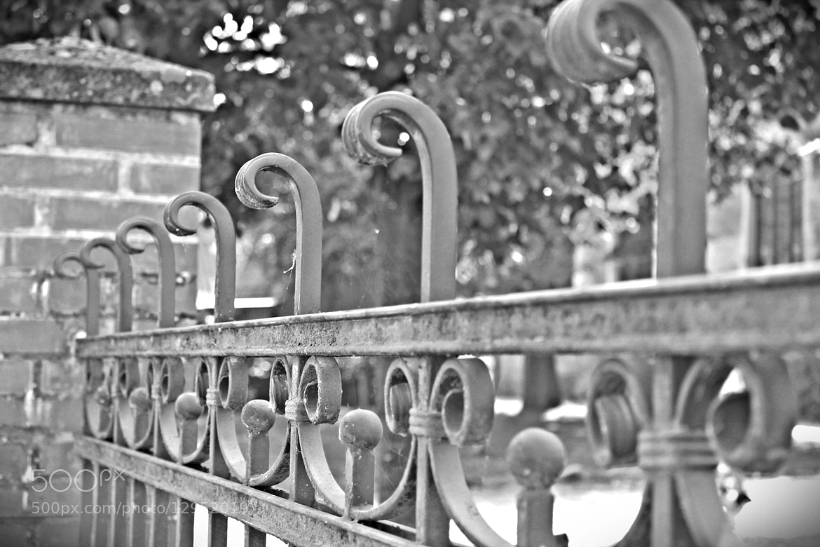 Photograph Fence by Svenja W. on 500px