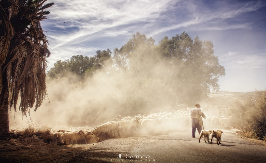 Trashumancia... by Jose luis Serrano Ariza on 500px.com