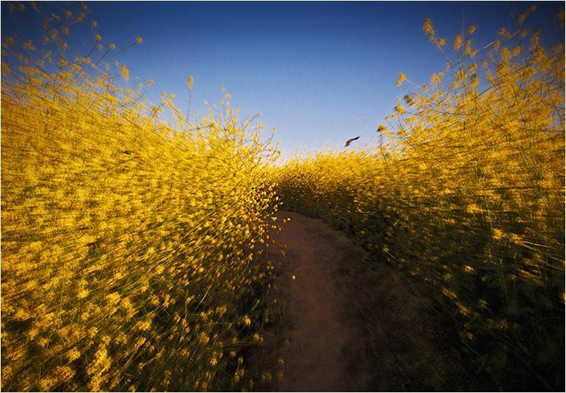 Photograph Road to Vincent by Mirza Ajanovic on 500px