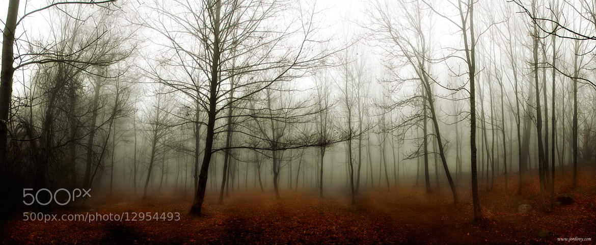 Photograph Niebla by Jorge Rey on 500px