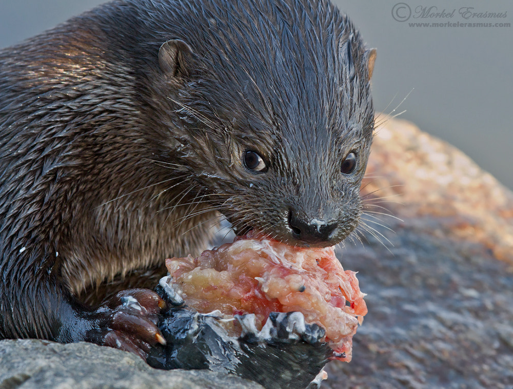 Photograph Leave my sushi alone! by Morkel Erasmus on 500px
