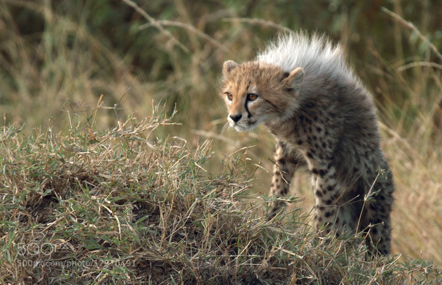 Photograph Curiosity. by Shovna Upadhyay on 500px